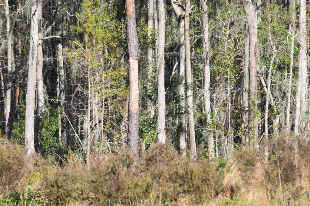 John Barry Miller - woods