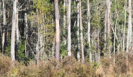 Woods of Land O'Lakes, Florida