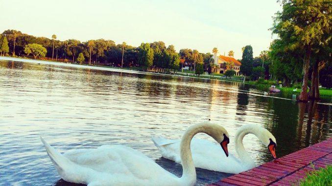 Lekeland Swans - John Barry Miller