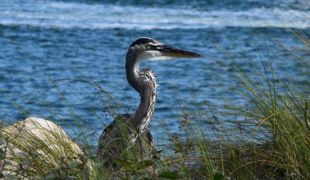 The bird on the ocean background - John Barry Miller