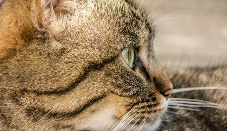 My Cat Fidor