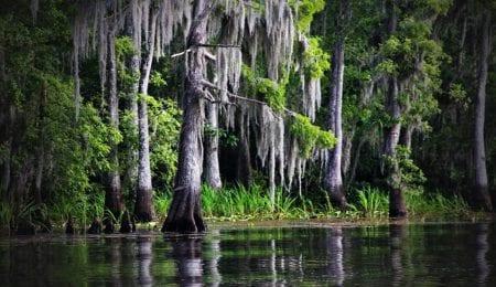 The curse of the Manchac Swamp (Louisiana)