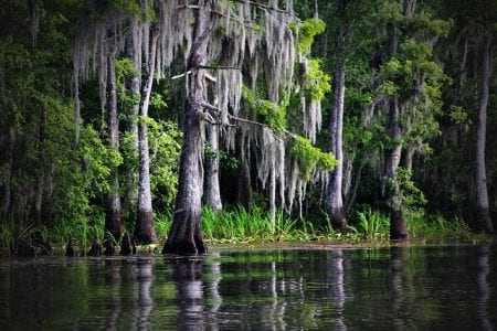 The Legend of the Voodoo Priestess Who Haunts a Louisiana Swamp