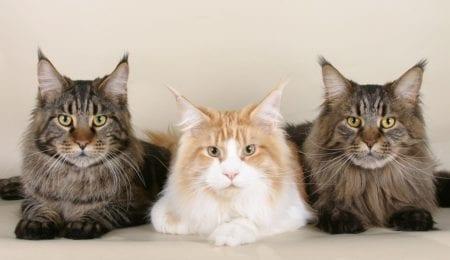 Celebrate International Cat Day