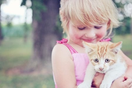 Top Five Calm Cats for Kids