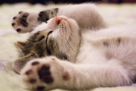 Cats sleep two thirds of the time in a day