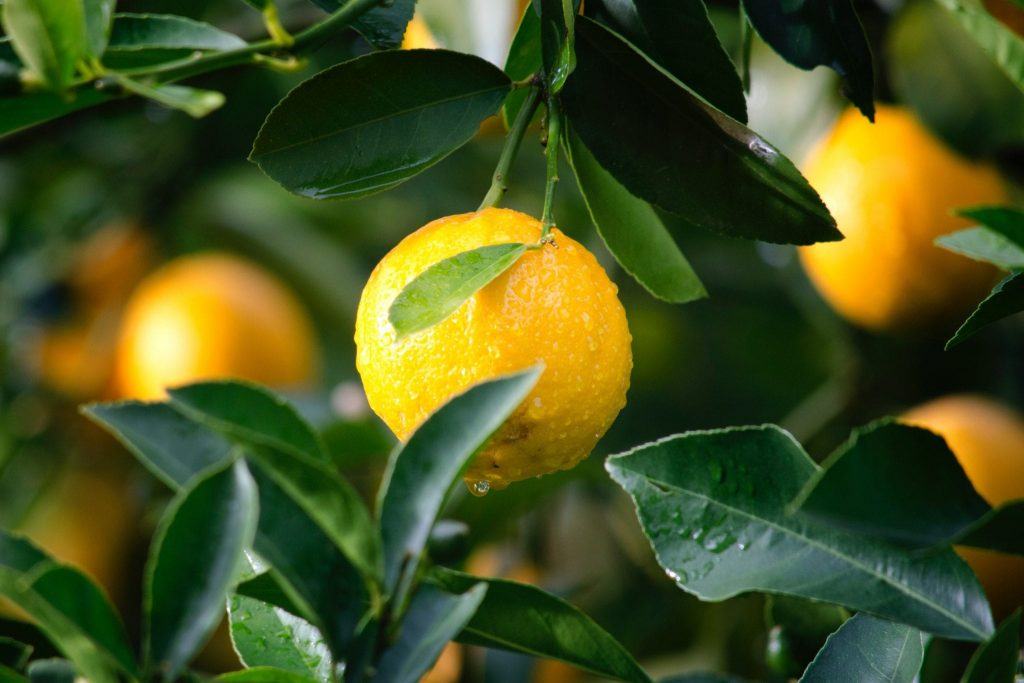 Benefits of the Lemon Diet: The Secrets of Weight Loss